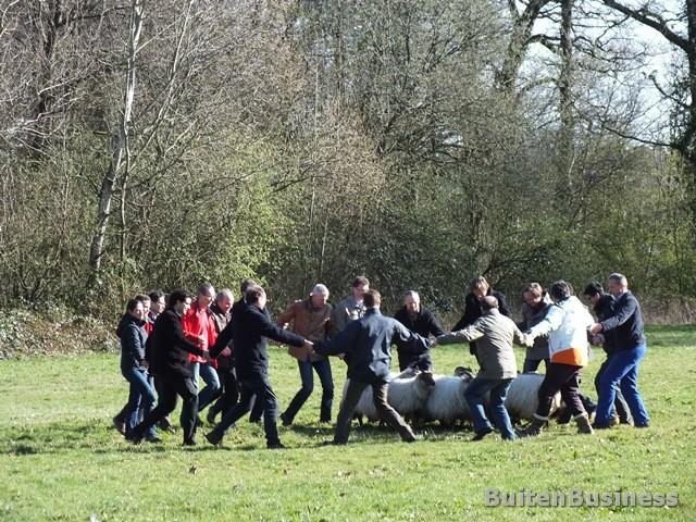Unipat-Teambuilding-Schapendrijven-BuitenBusiness-24-maart-201425